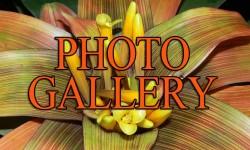 photo-gallery-2